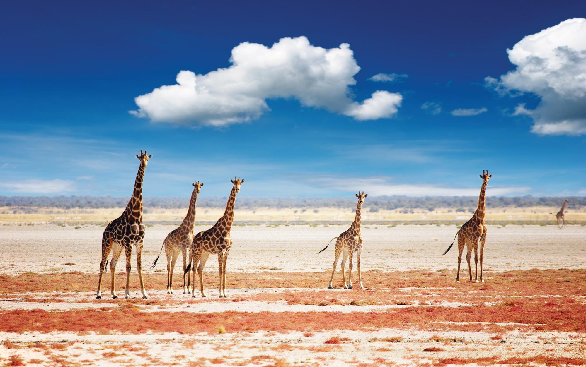 Travel Africa, Africa Safari Guide, Luxury African Safari