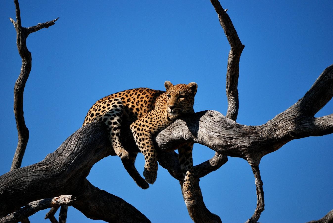 Botswana Travel Africa