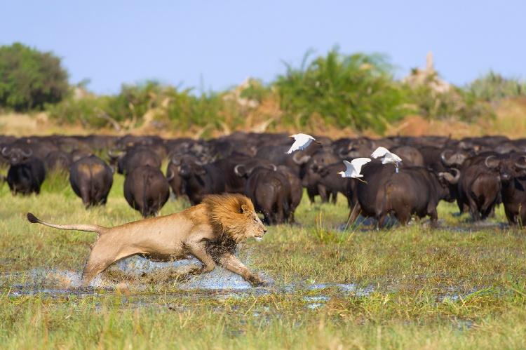Travel Africa, Africa Safari Guide, The great Migration, Luxury African Safari
