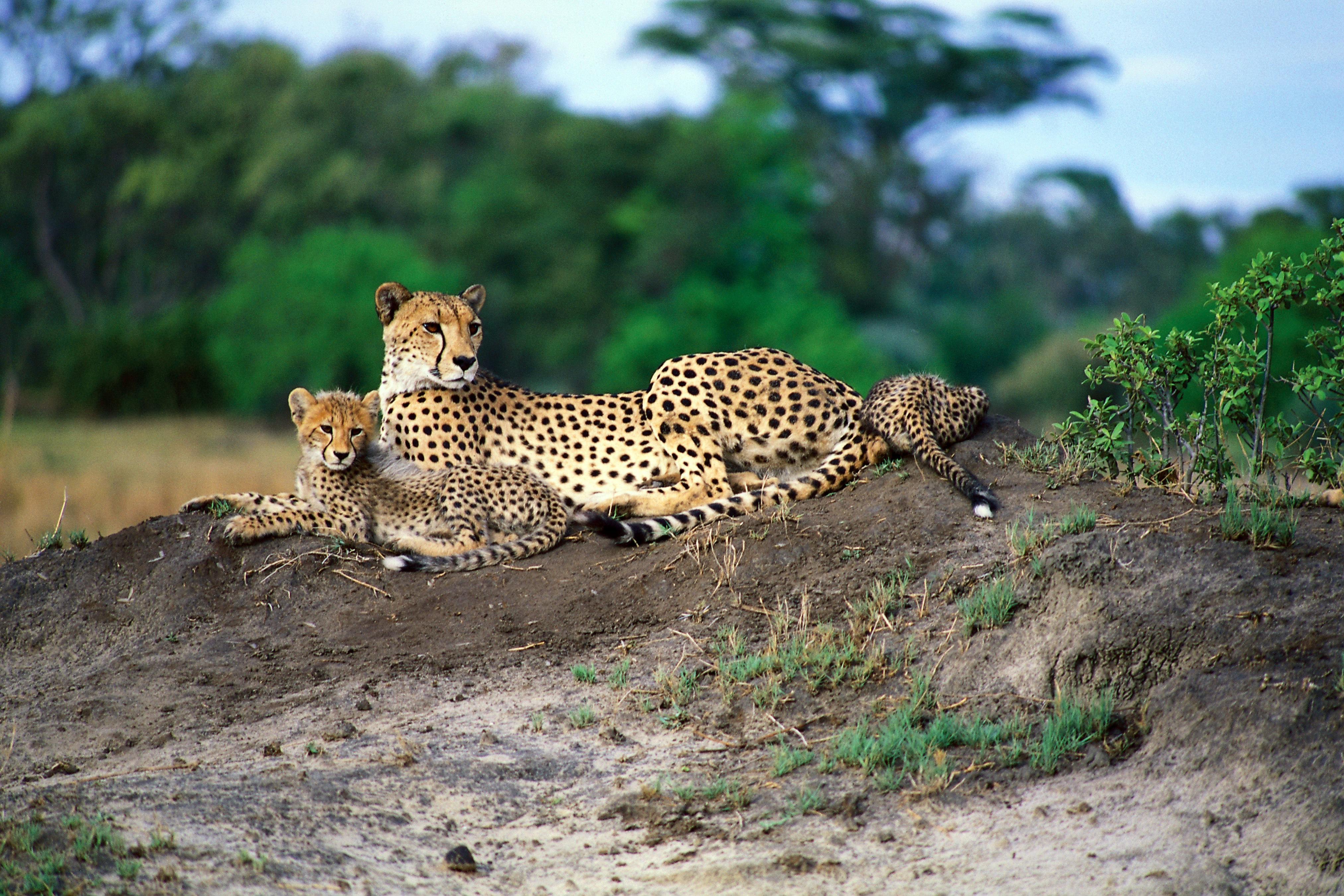 Africa Wildlife conservation, africa safari guide, travel africa, luxury safari tours, luxury Africa tours