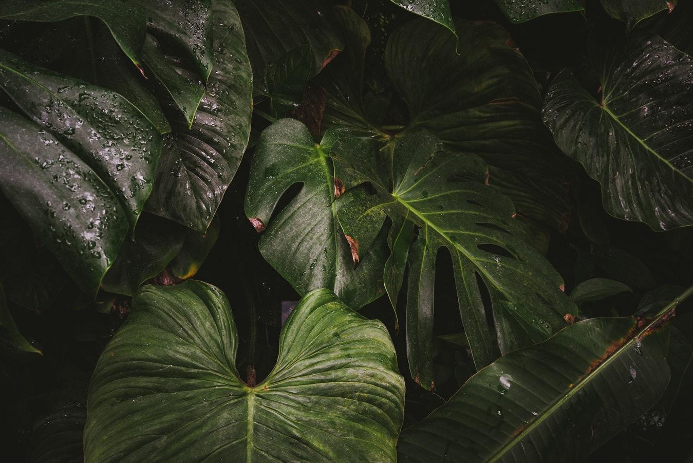 palms rainforest